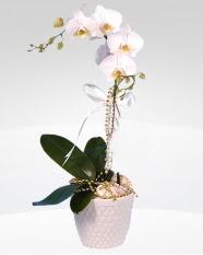 1 dallı orkide saksı çiçeği  Balıkesir online çiçekçi , çiçek siparişi