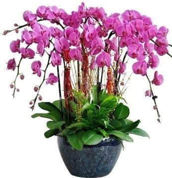 9 dallı mor orkide  Balıkesir 14 şubat sevgililer günü çiçek