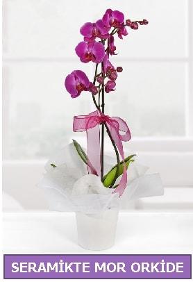 Seramik içerisinde birinci kalite tek dallı mor orkide  Balıkesir İnternetten çiçek siparişi